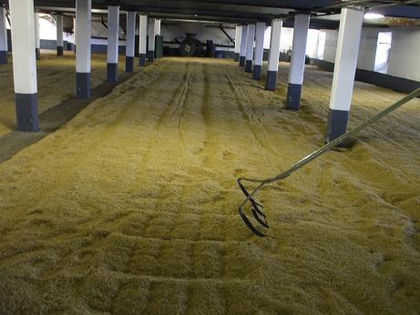 麦芽 発芽 フロアモルティング